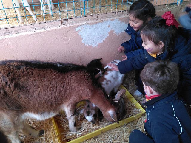 Infantil. Salida a la granja